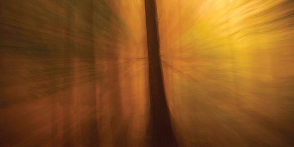 Fotoobraz Svítání v lese, 90x60 cm
