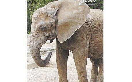 Poznámkový blok Bobo Bloky s motivy zvířat - kroužkový, prázdný, slon