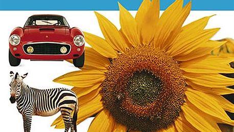 Kolektiv - První encyklopedie