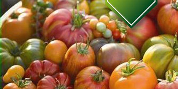 Balení 30 druhů rajčat - 30 semínek a poštovné ZDARMA s dodáním do 3 dnů! - 35106301