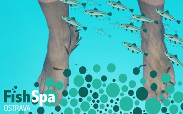 Pedikúra PRO DVA za 249 Kč rybičkami Garra Rufa!