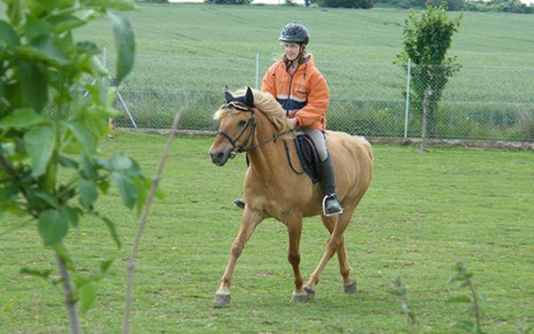 Hodinová jízda na koni pod odborným dohledem! Pro zkušené i naprosté začátečníky