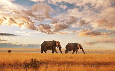 Zimní Keňa nabízí tropické teploty, koupání a safari. Zájezd na 12 dní s polopenzí v termínu 18- 29.1.2014.