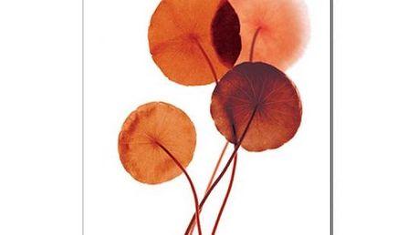 Jednodílný obraz Coloury red, 50x70 cm, PA524C