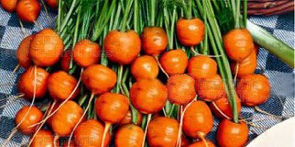 Semínka - malá kulatá mrkev a poštovné ZDARMA s dodáním do 3 dnů! - 9506815