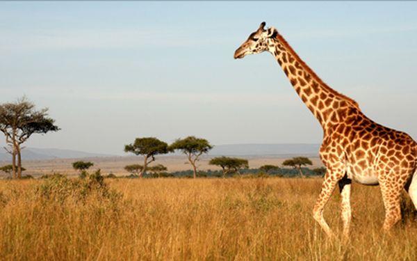 Exotická dovolená v Keni! Letecký zájezd na 13 dní s polopenzí v termínu 7.1.-19.1.