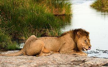 Keňa na 12 dní s polopenzí v termínu 18- 29.1. Během pobytu se můžete věnovat opalovaní na afrických plážích nebo dobrodružnému safari.