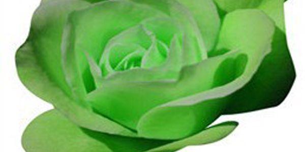 20 semínek zelené růže a poštovné ZDARMA! - 1707230