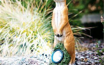 Solární osvětlení surikata. Originální dekorace na vaši zahradu.