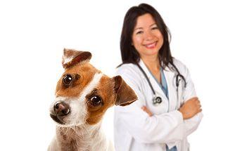 Očkování zvířátek proti vzteklině za 130 Kč přímo u Vás doma!