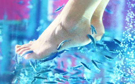 Rybičky GARRA RUFA - celosvětový hit v oblasti pedikúry za skvělých 169 Kč!