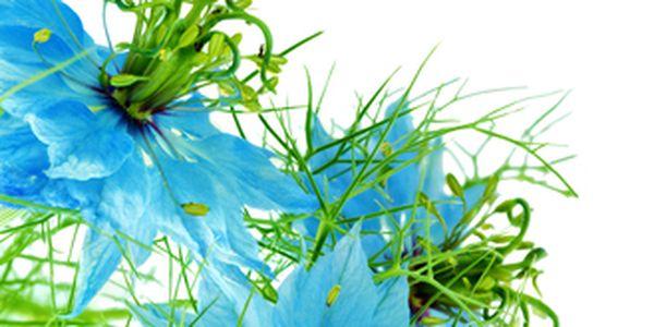 Černucha damašská barevná - 20 semínek a poštovné ZDARMA s dodáním do 3 dnů! - 5007395
