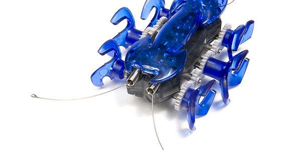 Modrý mravenec