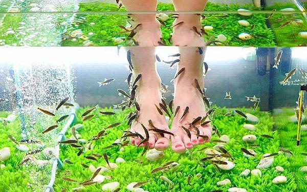 Relaxační lázeň s rybkami Garra Rufa pro 1 nebo 2 osoby