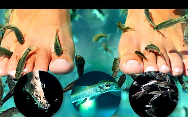 Svěřte se do péče přírodních pedikérek - rybiček Garra Rufa! Pouhých 105 Kč za půlhodinovou koupel. Vhodné k odstranění tvrdé či odumřelé kůže