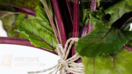 Mangold Rhubarb Chard - balení 100 semen a poštovné ZDARMA s dodáním do 3 dnů! - 14008152