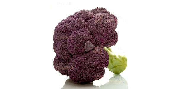 Brokolice fialová - balení 20 semen a poštovné ZDARMA s dodáním do 3 dnů! - 9808042