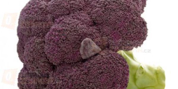 Brokolice fialová - balení 20 semen a poštovné ZDARMA s dodáním do 3 dnů! - 13508042