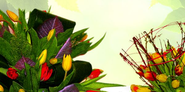 Kytice tulipánů a Raffaelo od 299 Kč! 7, 20, nebo 31 tulipánů!