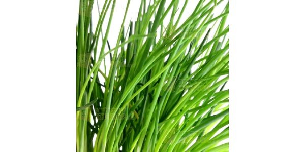 10 semínek česnekové pažitky a poštovné ZDARMA s dodáním do 3 dnů! - 10106311