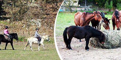 Koně a poníci - Pastvina RHIANNON Hlubočky