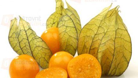 Mochyně peruánská - balení 20 semen a poštovné ZDARMA s dodáním do 3 dnů! - 14008972