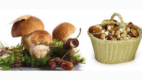 Vypěstujte si houby u Vás na zahrádce v pohodlí a bez námahy. Užijte si smaženici, bramboračku a další dobrůtky bez zdlouhavého hledání hub v lese.