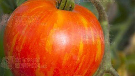 Rajče Mr. Stripey - tyčková odrůda - 5 semen a poštovné ZDARMA s dodáním do 3 dnů! - 14909905
