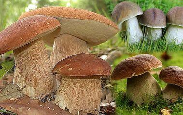 Osm druhů lesních hub - sadba