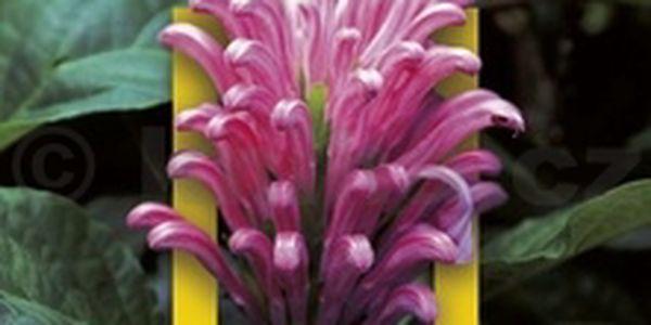 Havaj, velký průvodce National Geographic