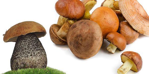 Pěstební mix 8 druhů hub pro vlastní pěstování