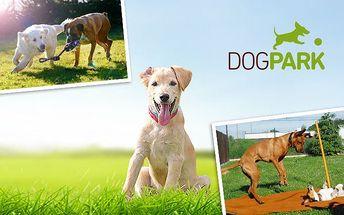 Jeden den v psí školce Dogpark v Praze s celodenním hlídáním