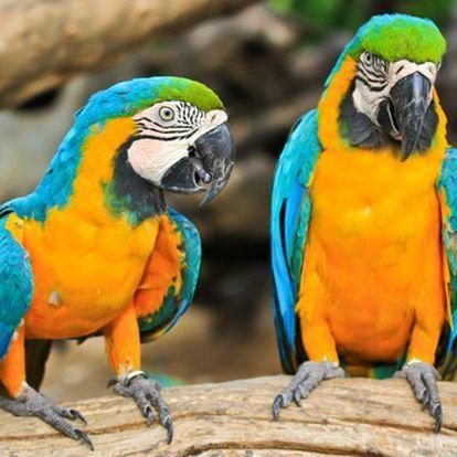 Rodinná vstupenka do Tropic Hukvaldy akce!