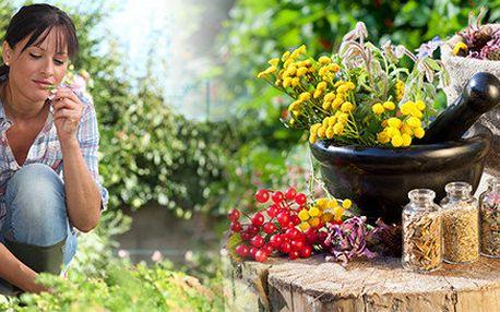 Bylinkami ke zdraví, aneb jak si sami vyrobit domácí bylinné produkty