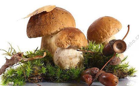 Pěstební mix osmi druhů lesních hub - 2 sady za cenu jedné!