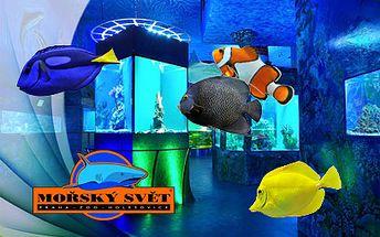 Do Mořského světa od 336 Kč pro celou rodinu! Stovky ryb v největší nádrži v ČR!