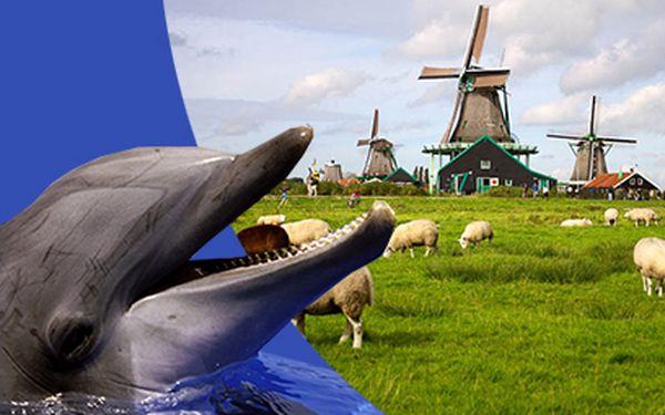 Poznávací zájezd do Holandska s návštěvou Delfinária za 2749 Kč včetně ubytování!