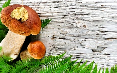 2x 10 g balení sadby lesních hub v akční nabídce!