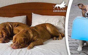 Ubytování psího mazlíka v hotelu pro psy