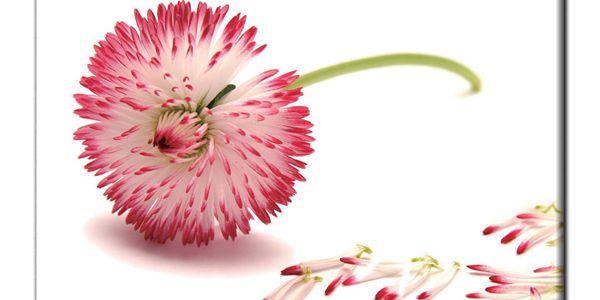 Jednodílný obraz s motivem růžového květu na bílém pozadí. Rozměr obrazu 60 x 60 cm. Motivy jsou vytištěné na PVC plátně, kterým je potažena dřevěná deska o tloušťce 2,5 cm. Snadná údržba obrazu jej předurčuje i do prostor s vyšším zatížením. Digitá