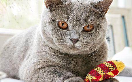 Hračka na čištění zubů pro kočky
