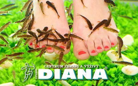 Relaxační lázeň s rybami Garra Rufa pro jednoho nebo pro pár ve studiu Diana