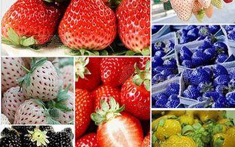 Jahody různých barev - 100 kusů semínek a poštovné ZDARMA! - 21011937