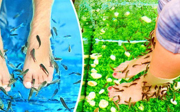 Relaxační mikromasáž rybičkami Garra Rufa v centru ČB v celkové délce 45 minut