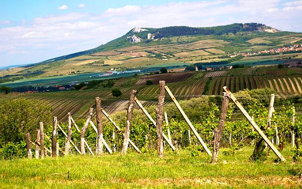 3denní pobyt v penzionu Rendez Vous ve Valticích s rautem a degustací vín pro 2 osoby