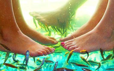 Relaxační lázeň s rybami Garra Rufa pro jednoho nebo pro pár v brněnském studiu Diana