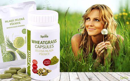 Zelená mladá pšenice v tobolkách nebo v prášku