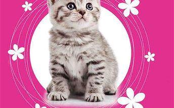 Karton PP Desky na sešity A5 - Kočka