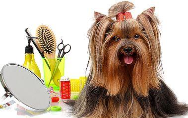 Stříhání a úprava srsti psů všech plemen i kříženců
