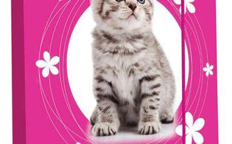 Karton PP Desky na sešity s boxem A5 - Kočka